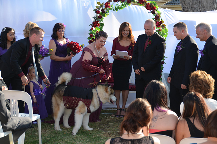 dandenong civil wedding celebrant